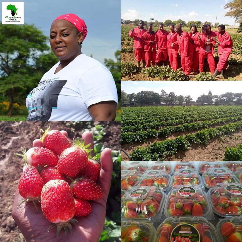 Straw Berry Farming